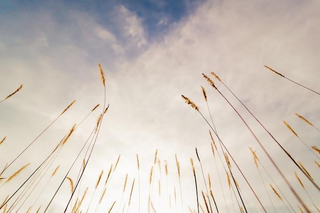 Hohes gras stammt mit blumen von grund auf als silhouetten gegen weiße wolken