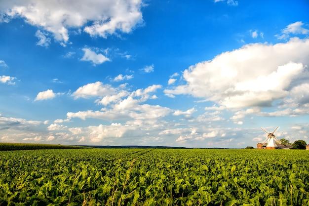 Holland-windmühlenlandschaft mit blauem himmel und grünem gras. widmill in lüneburg, deutschland