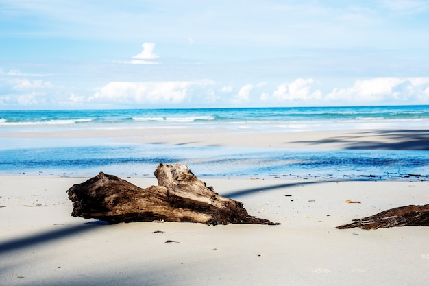 Holz am strand.