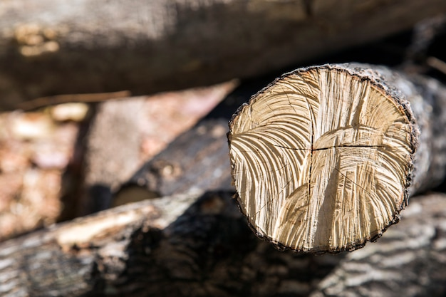 Holz loggen wald für hintergrund