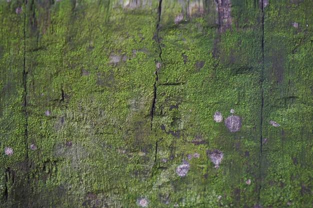 Holz mit moos