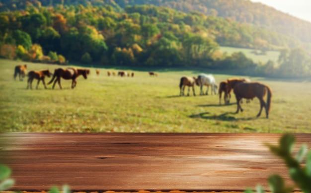 Holz mit pferden im feld mit berg