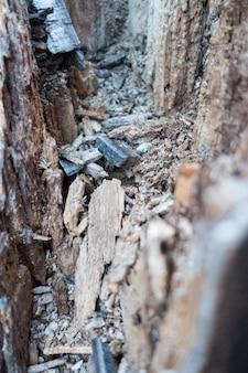 Holz textur von faulen baumstamm,