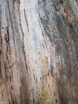 Holz von termiten gefressen.