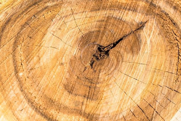 Holzbaumstamm textur kann für den hintergrund verwendet werden