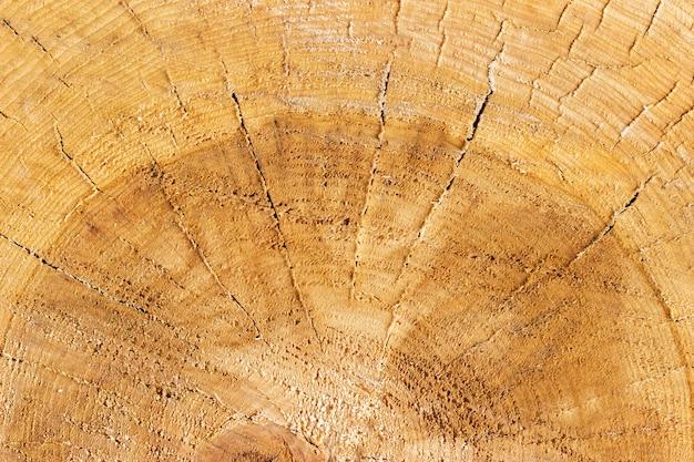Holzbeschaffenheit des geschnittenen baumstammes