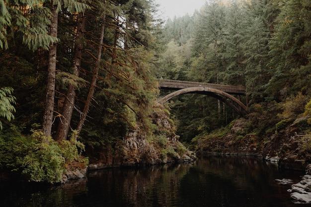 Holzbrücke auf dem fluss in einem wald, umgeben von bäumen und büschen