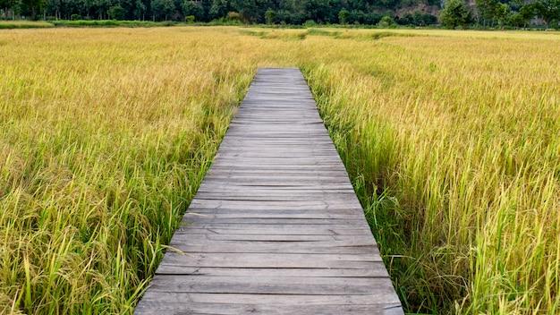 Holzbrücke auf reisfeld in der landschaft