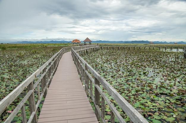 Holzbrücke bung bua, der naturlehrpfad im lotossee mit kalksteingebirgslandschaft bei khao sam roi yod national park, provinz prachuap khiri khan thailand.