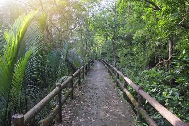 Holzbrücke in einem tropischen dschungel