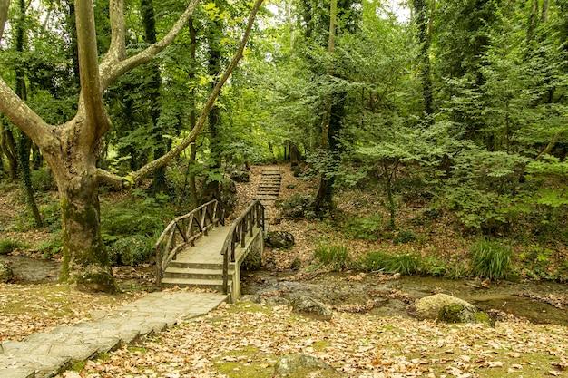 Holzbrücke über einen schmalen fluss in einem dichten wald