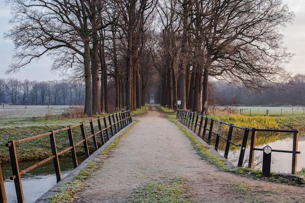 Holzbrücke und auflage zum wald in den niederlanden, mit einem ruhigen fluss