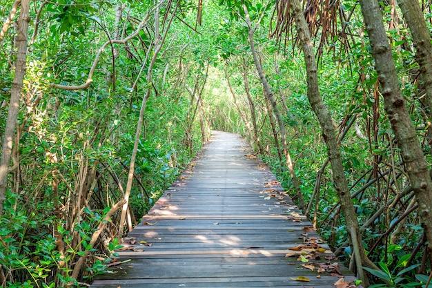 Holzbrücke und mangrovenwald.
