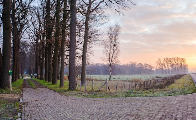 Holzbrücke und pad in den wald in den niederlanden,