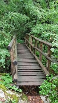 Holzbrücke und pfad im wald