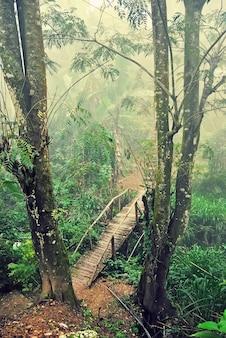 Holzbrücke zwischen palmen und brücke im morgennebel, ella, sri lanka