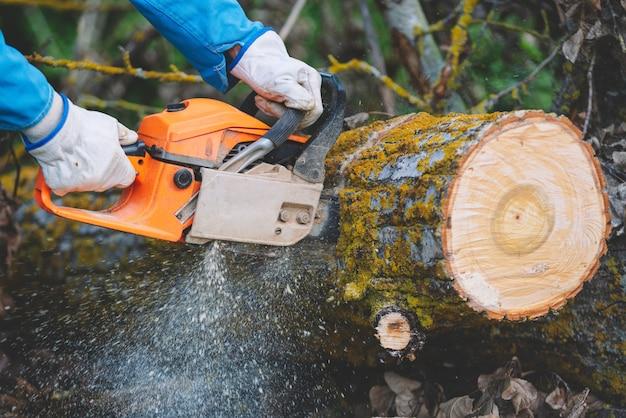 Holzfäller, der altes holz mit einer kettensäge schneidet