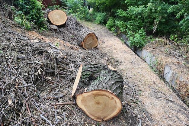 Holzfäller sägewerk