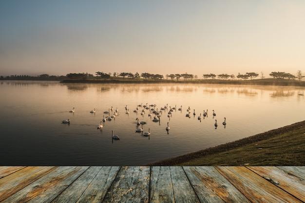 Holzfußbodenschwan auf see morgens