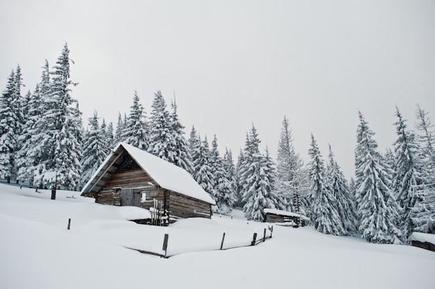 Holzhaus an den kiefern bedeckt durch schnee auf berg chomiak, schöne winterlandschaften von karpatenbergen, ukraine, frostnatur,