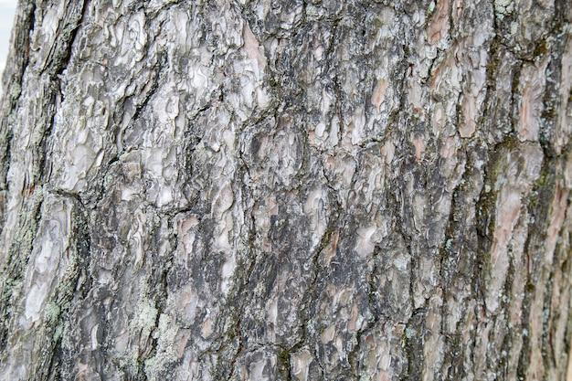 Holzhautmuster von einem echten baum