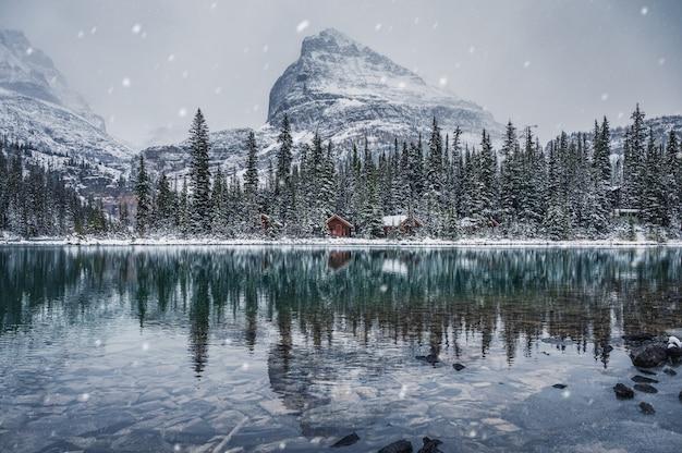 Holzhütte im kiefernwald mit schneebedecktem spiegelbild am lake o'hara im yoho-nationalpark