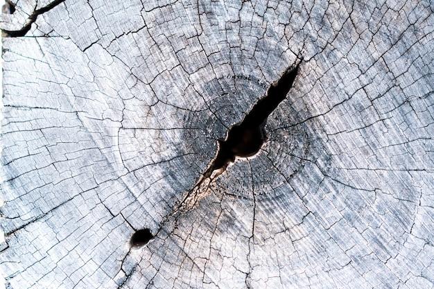 Holzkern, der lange zeit regen und sonne ausgesetzt war