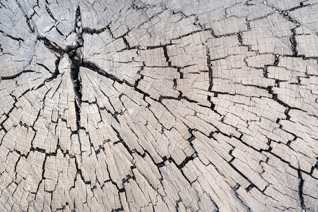 Holzlärchenbeschaffenheit des geschnittenen baumstammes, nahaufnahme. stumpfholz.