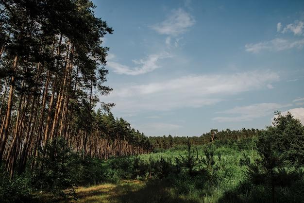 Holzlandschaft, wald und die lichtung