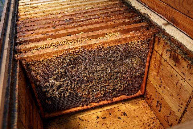 Holzrahmen mit bienenwabe in geöffnetem hölzernem bienenstock, sammeln honig, imkereikonzept