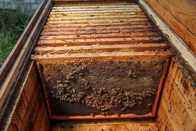 Holzrahmen mit bienenwabe in geöffnetem hölzernem bienenstock. sammle honig. imkerei-konzept