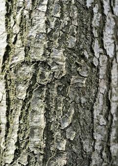 Holzrinde textur hintergrund nahaufnahme in hoher auflösung mit sichtbarer textur für oder hintergrund oder design verwendung, textur schuss von brauner baumrinde, füllung des rahmens