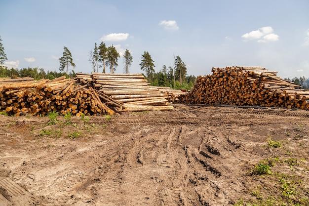 Holzstämme stapelten sich auf dem boden