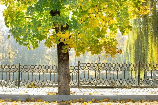Holzstamm eines großen baumes mit gefallenen gelben blättern im herbstpark.