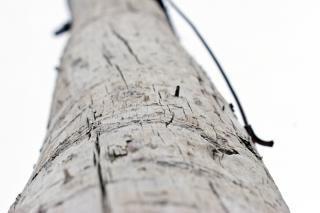 Holzstange, bereich