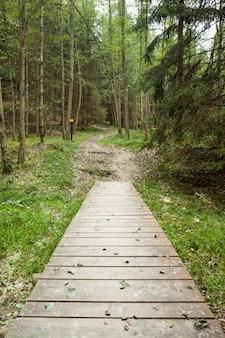 Holzsteg am wald entlang