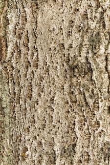 Holzstruktur espe von dunkler, rauer baumrinde braune farbe