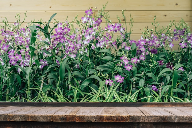 Holztisch vor orchideenblume im orchideengarten am winter- oder frühlingstag