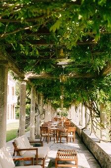 Holztische im restaurant auf der terrasse unter glyzinienreben in den alten säulen eines italieners