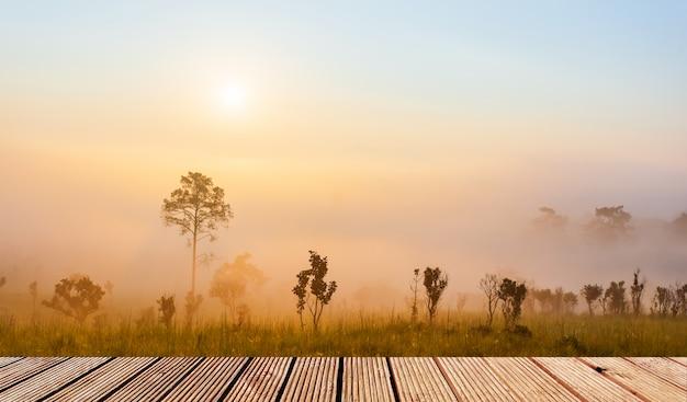 Holztischplatte mit pinus mugo - es ist auch bekannt als kriechkiefer, zwerggebirgskiefer, mugo-kiefer