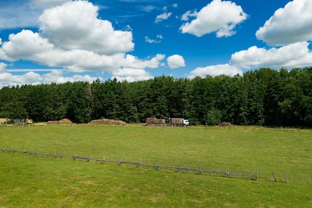 Holztransporter mit holzheberkran sammelt gefällte bäume.