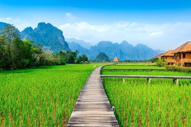 Holzweg und grünes reisfeld in vang vieng, laos.