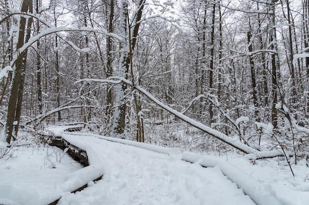 Holzwegweg durch gefrorenen wald mit schnee. winterlandschaft