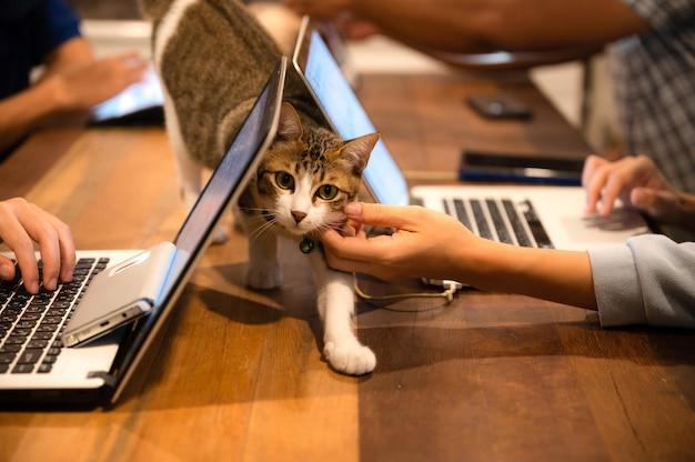 Homeoffice, von zu hause aus arbeiten und mit katze spielen, gesichtsmaske tragen während der arbeit, um die soziale distanzierung während covid-19 aufrechtzuerhalten, freiberufler online arbeiten, lifestyle-konzept.