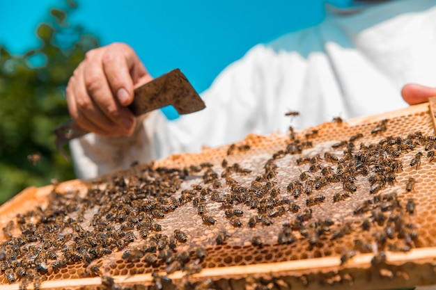 Honigbienen auf einem hölzernen bienenstock. hochwertiges foto