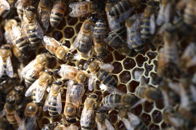 Honigbienen im bienenstock auf waben imkerschwarm im bienenstockkonzept