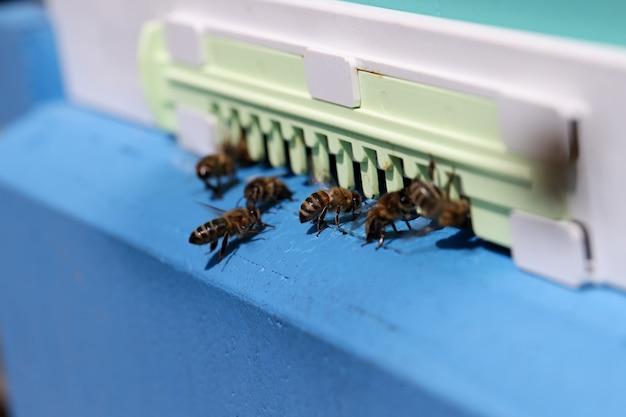 Honigbienen schwärmen und fliegen um ihr bienenzuchtkonzept