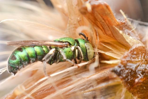 Honigbienenblatt schneiden