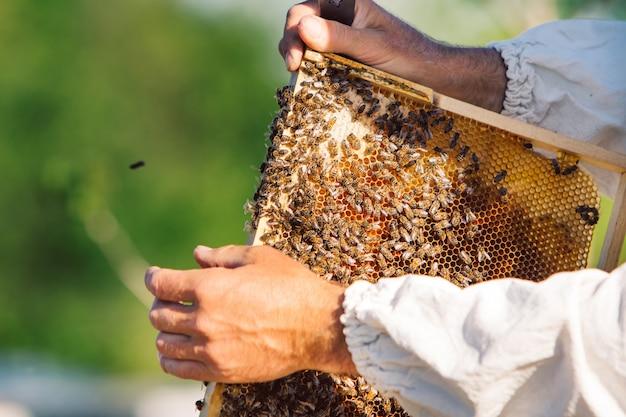 Honigbienenrahmen aus einem bienenstock mit koloniekollapsstörung. rahmen mit bienen bedeckt.