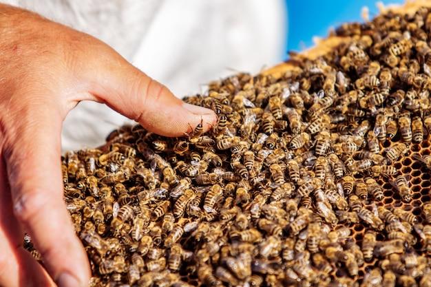 Honigzelle mit bienen nahaufnahme an einem sonnigen tag. imkerei. bienenhaus